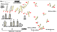 Plan Cauria statues-menhirs